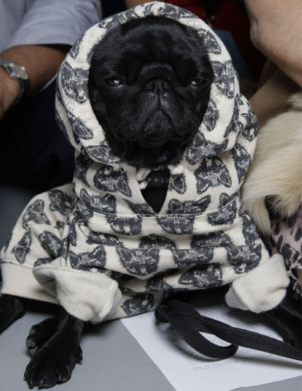looks_mascotas_fashion_vestidos_perros_caninos_dogs_modaddiction