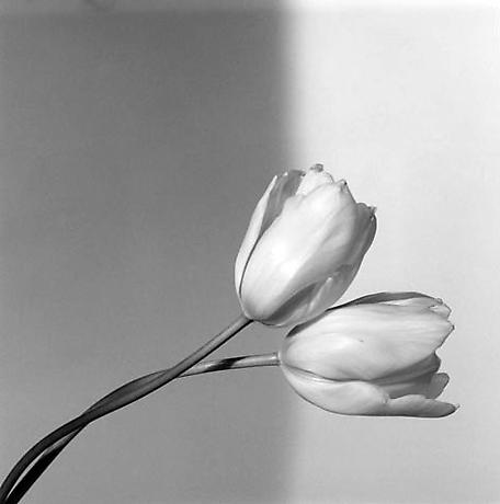 robert-mapplethorpe-photography-fotografia-homoerotismo-sexualidad-newyork-modaddiction-10