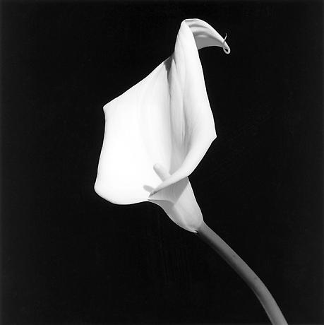 robert-mapplethorpe-photography-fotografia-homoerotismo-sexualidad-newyork-modaddiction-9